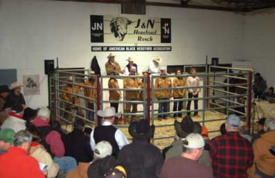 Cattle Sale